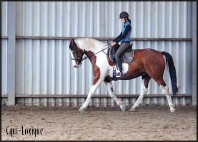 apple-dressage